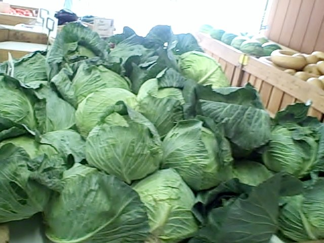 Cabbages seen on the Vegetarian Gazette